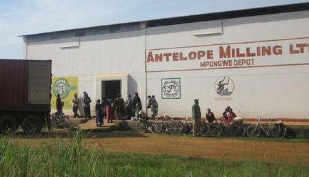 Mpongwe continues experiencing meallie meal shortages