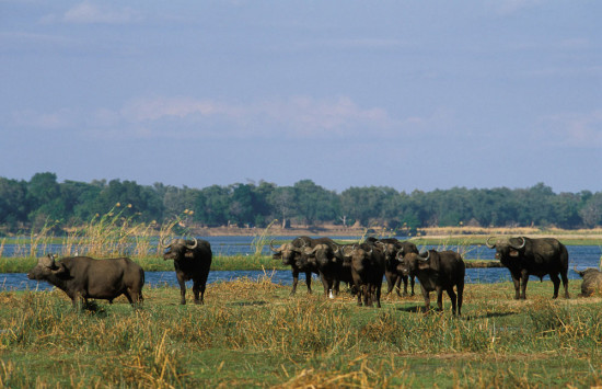 Poor animals; PF govt agrees to turn Lower Zambezi Park into open pit mine