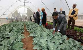 Lungu inspects vegetable field in Israel