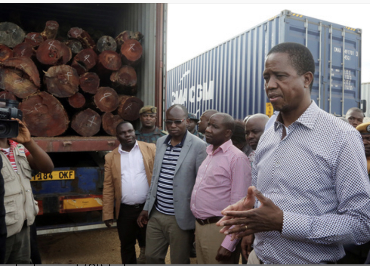 Transparency calls for full investigation on illegal trade of Mukula by Zambian leaders