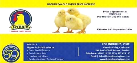 Day old chicks to cost K10